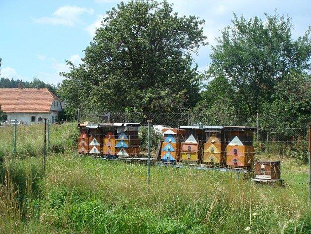 Včelíny poblíž haldy č. 15uBrodu.