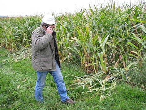 Vandal zničil za Bohutínem kukuřičné pole