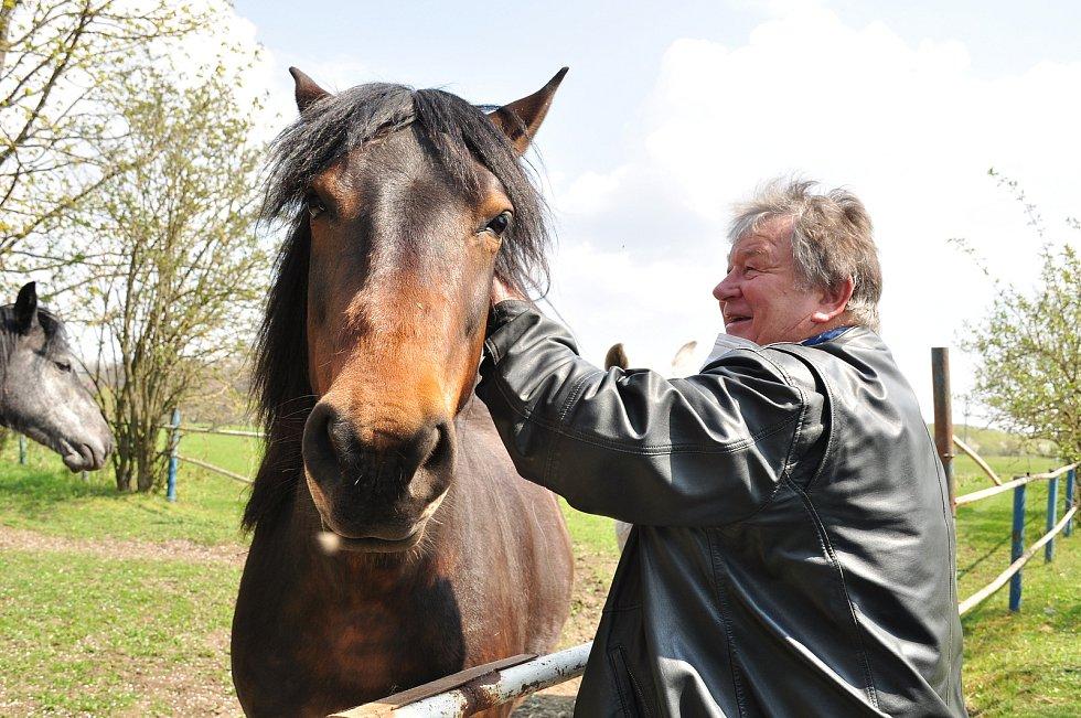 Výstava potěší milovníky známek i koní (ilustrační foto).