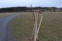Šest mladých stromků podél cyklostezky do Bohutína padlo za oběť zřejmě vandalovi.