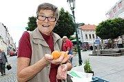 Jitka Tomanová na tržišti v centru Příbrami s hrstí meruněk. Z těch údajně moravských se musí vybírat, když si chce člověk pochutnat nebo někoho obdarovat.