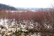 Vokačovský rybník.