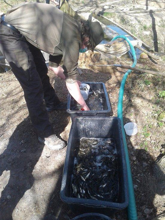 Rožmitálští rybáři v době koronaviru nezahálejí.