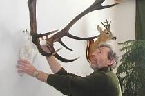 Jednatel okresního mysliveckého spolku Milan Kubů při instalaci trofejí na jedné z předchozích přehlídek loveckých trofejí.