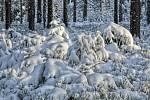 CHKO Brdy - Zima.