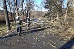 Petrovičtí hasiči odklízeli spadlé stromy po orkánu Sabine.