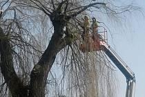 Prořezávání nebezpečných stromů v Rožmitále pod Třemšínem.