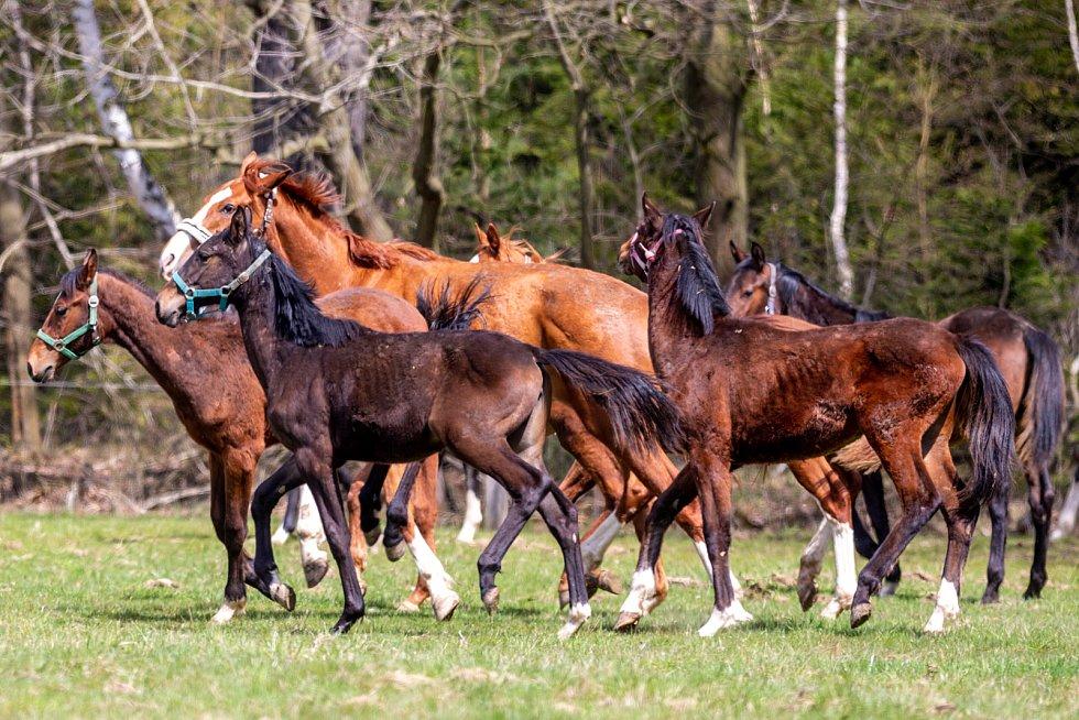 Výstava potěší milovníky koní i poštovních známek (ilustrační foto).