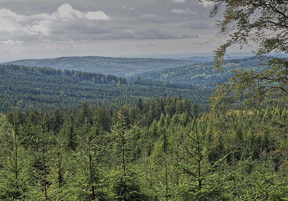 CHKO Brdy - Les nad údolím Rezervy.