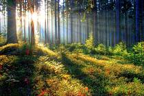 Podzimní podvečer v brdských lesích.