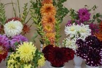 Květy, MDŽ. Ilustrační foto