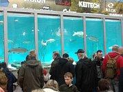 Skupina rybářů rožmitálské místní organizace a zástupci rybářského kroužku v sobotu 17. února vyjeli na největší rybářský veletrh For Fishing do Prahy.