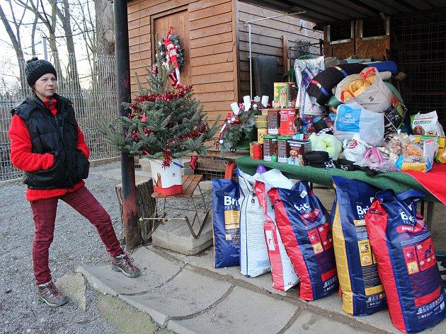 Před Štědrým dnem se pro opuštěné psy sešlo pod vánočním stromkem mnoho dárků.