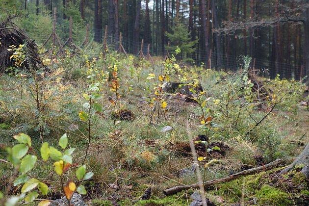 Za dva roky existence byla v CHKO Brdy udělána opatření pro přírodu za téměř 7,5 milionu korun z dotací Ministerstva životního prostředí Programu péče o krajinu.