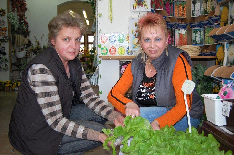 Květinářky Jiřina a Irena u sadby.