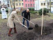 Buk červený, jako symbol nedožitých 85. narozenin manželky prvního českého prezidenta Václava Havla - Olgy Havlové, byl ve středu 28. března slavnostně vysazen v příbramském Parku přátelství.