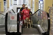 V obchodních centrech v Žežické ulici se konala část praktického výcviku asistenčních psů pod záštitou neziskové organizace Helppes.