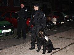 Večer, až do uzavření volebních místností, kontroloval pořádek a poklidný průběh voleb v pravidelných intervalech také psovod dobříšské městské policie se svým služebním psem Paganinim.