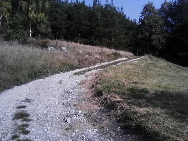 Cesta zvolna stoupala k lesu.