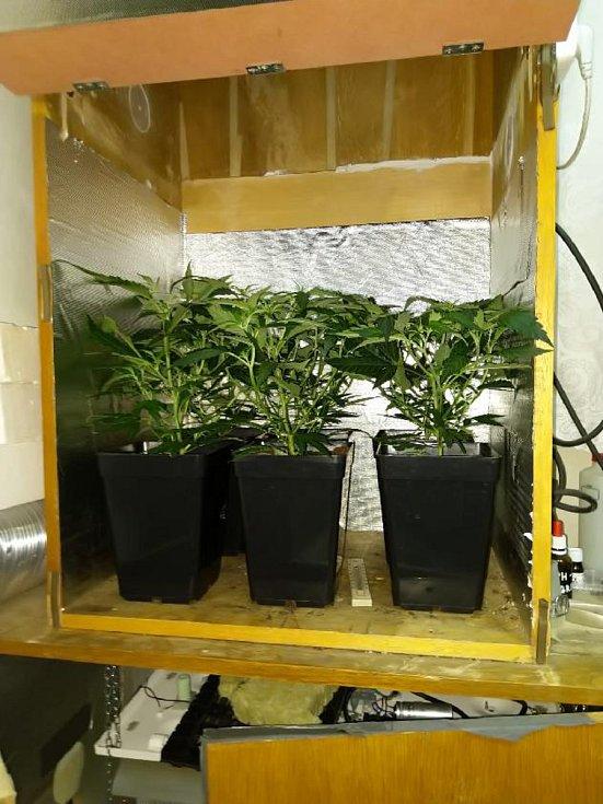 Ilegální pěstování konopí.