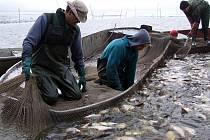 Na intenzivní hospodaření na padrťských rybnících (na snímku) poukazují ochránci přírody.
