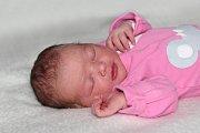 Natálie Nežerková se narodila 1. listopadu s váhou 3,95 kg a mírou 48 cm Petře a Karlovi z Věšína. Doma čeká Dominik (8).