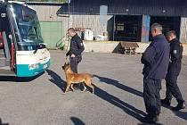 Z policejního mistrovství psovodů v Solenicích.
