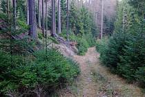 Les mezi Hengstem a Třemšínem.