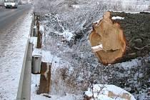 Topolová alej už nelemuje silnici do Dubna. Stromy byly pokáceny na žádost a povolení obce. V minulosti tu strom padl na auto a jen zázrakem se nikomu nic nestalo.