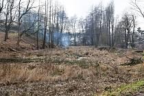 Kácení stromů okolo Čekalíkovského rybníka.