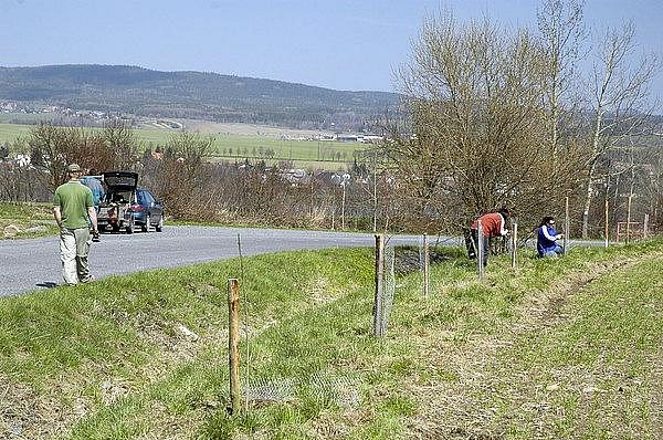Ochránci přírody sázeli u Rožmitálu stromy.