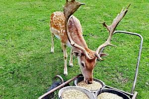 Vydejte se do Zooparku za jeleny.