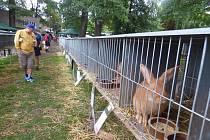 Povltavské výstavy v Sedlčanech, která se konala o tomto víkendu, se zúčastnilo celkem 57 chovatelů drobného zvířectva.