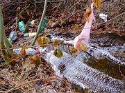 Odpadky v potůčku v lese.