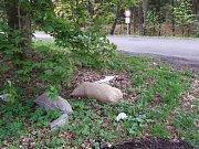 Odpadky u Klabavy v naturovém území v Brdech.