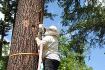Na Brdskou vysočinu se vrátil středověký způsob chovu včel.