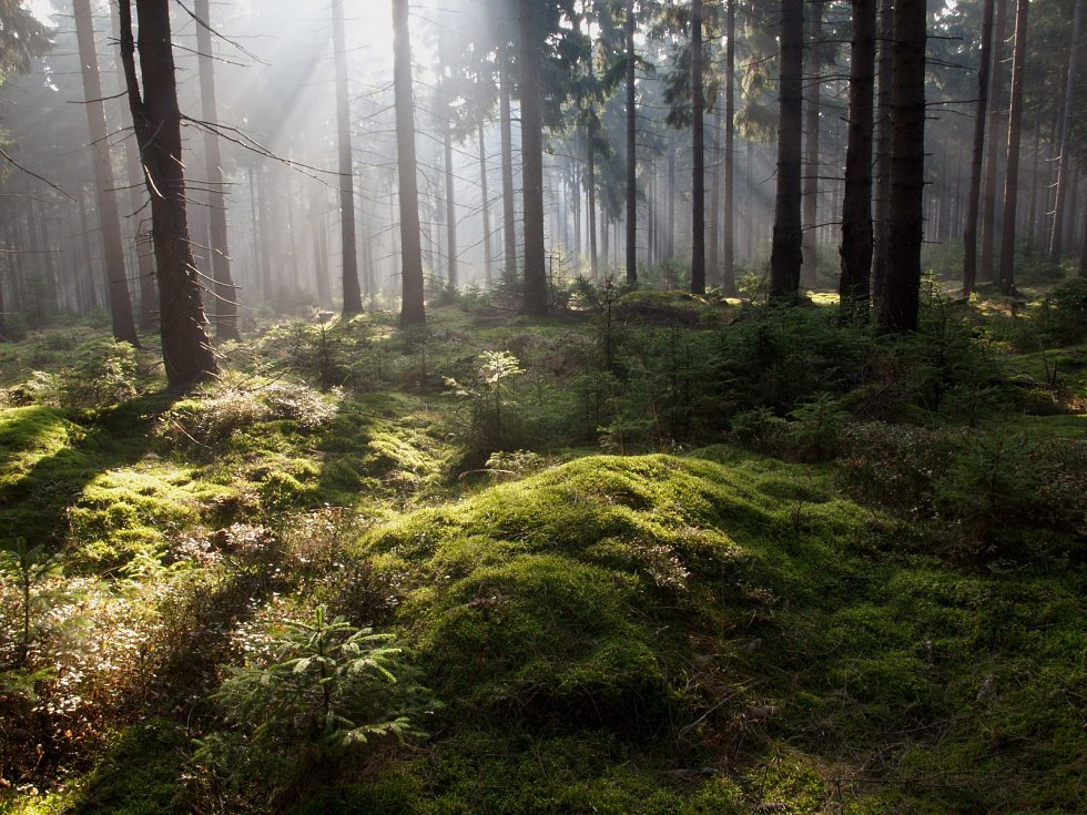 Příroda v CHKO Brdy.