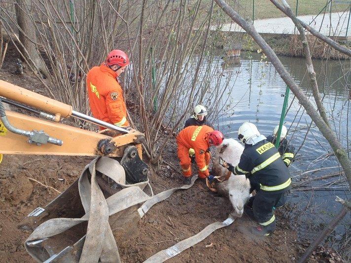 Poslední den v roce řešili středočeští hasiči poměrně kuriózní zásah, kdy operátoři tísňové linky přijali informaci o pádu velblouda do rybníka v obci Hulín na Příbramsku.