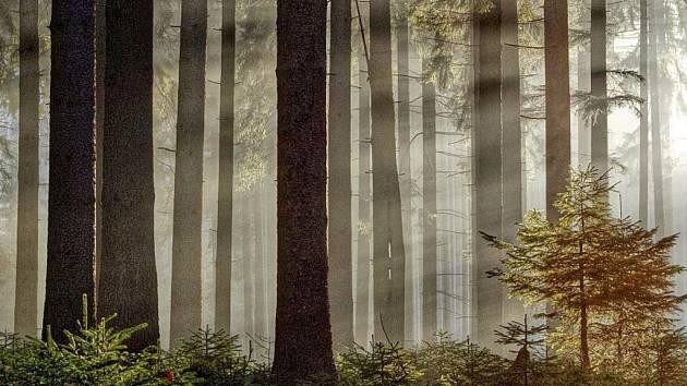 Brdská příroda. Ilustrační foto.