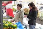 Na Bílou sobotu zaplnilo sedlčanské náměstí 35 stánků farmářů a prodejců – především jarního a velikonočního zboží. Náměstí tak hýřilo přemírou balkonových květin a sadby do zahrádek či ovocných stromků.