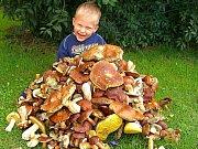 Tříletý Matýsek Bejček z Příbrami s opravdu bohatou houbovou nadílkou.