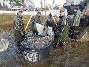Rožmitálští rybáři v dubnu lovili i zarybňovali rybníky.