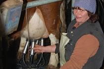Farmáři prodělali na mléce už miliony.
