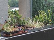 Kolekce masožravých rostlin.