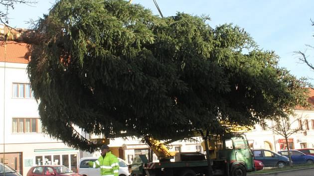 Doprava a stavění stromu na Husově náměstí v Rakovníku
