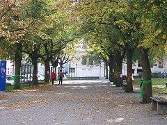 Lípy na Komenského náměstí