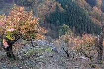 Den stromů 2014 na Křivoklátsku