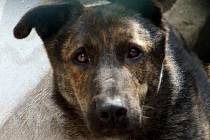 Údajně týraný pes Brit