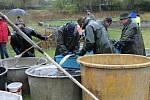 Z novostrašeckého rybníka vylovili na třicet metráků ryb.