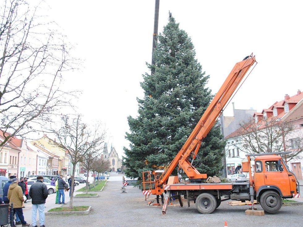 Historické centrum Rakovníka zdobí od pátku strom z obce Kolešovice.